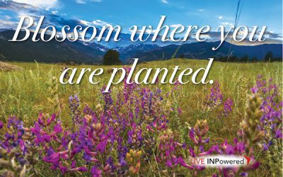 Blossom where you are planted