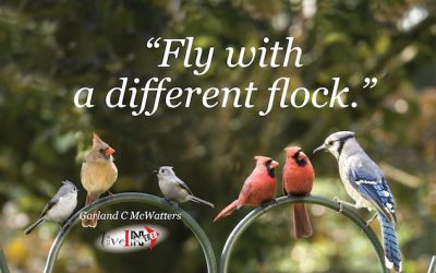 Fly with a different flock